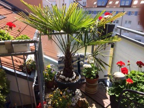 Traumhafte 2 ZKB über den Dächern von Frankenthal und doch im Herzen der Stadt!!, 67227 Frankenthal, Wohnung